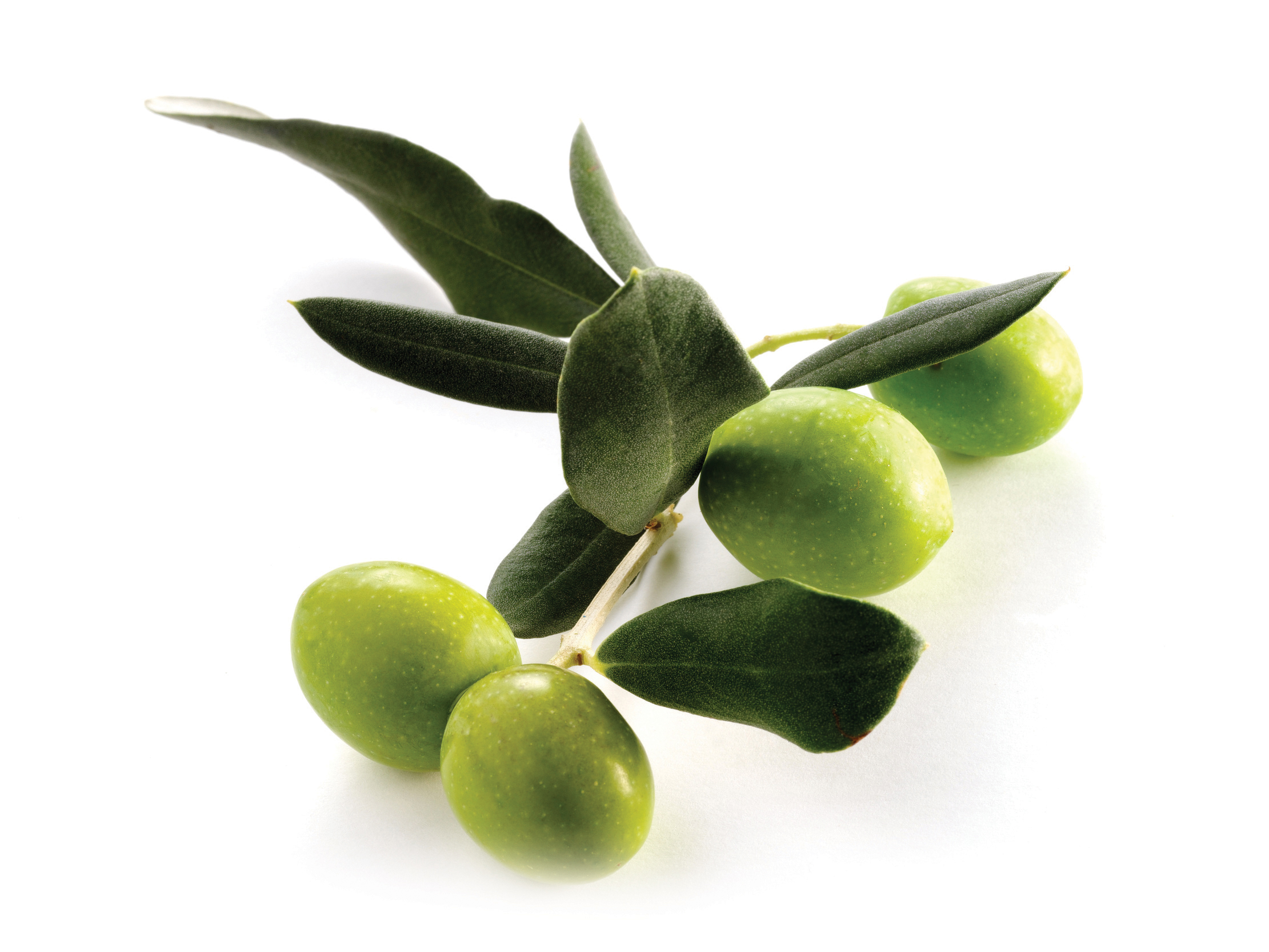 FOUR OLIVES ON BRANCH WITH LEAVES